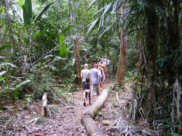 Isadou Suriname 052 jungle