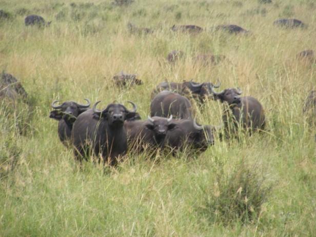 Tanzania 238