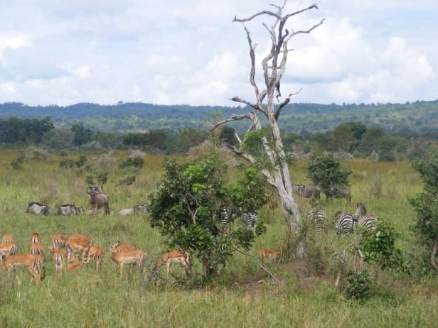 Tanzania 255