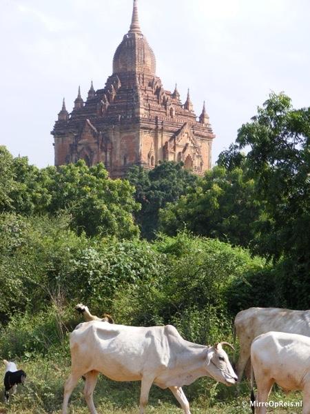 Bagan Myanmar 050