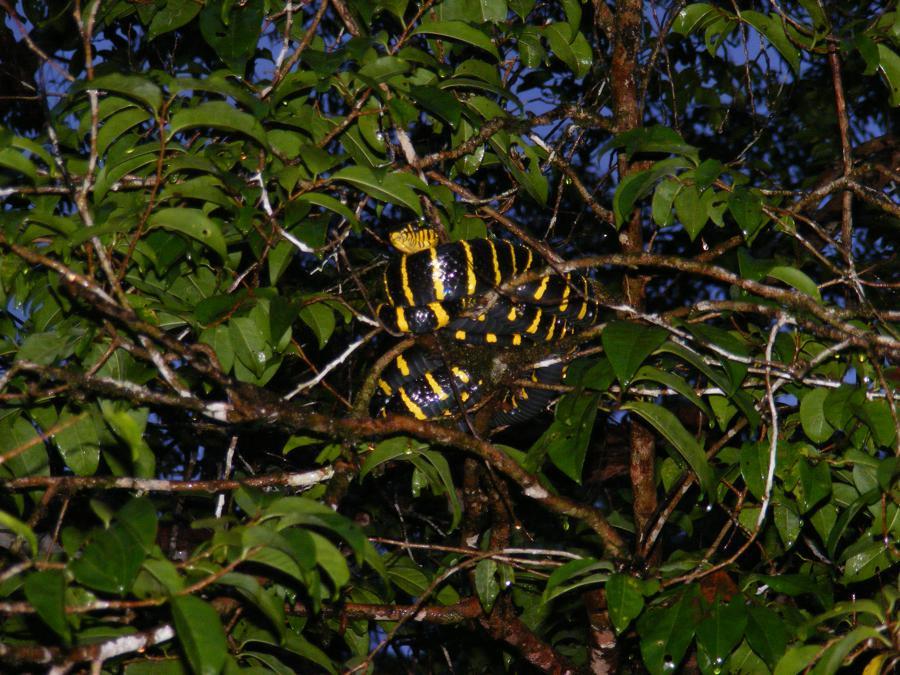 Kinabatangan Borneo 428