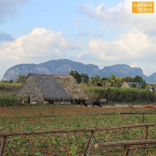 Cuba blog: Vinales huis tabak