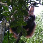 Borneo-242.jpg