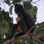 Borneo-541.jpg