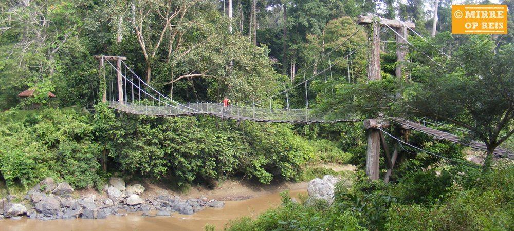 Borneo bezienswaardigheden: Danum Valley