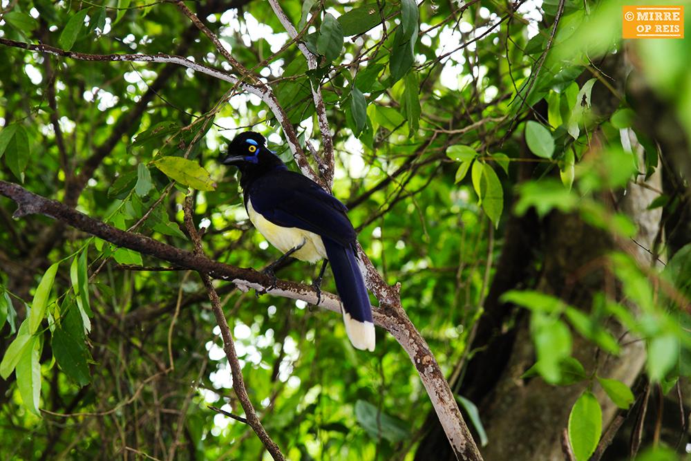 Iguazu watervallen vogel 005