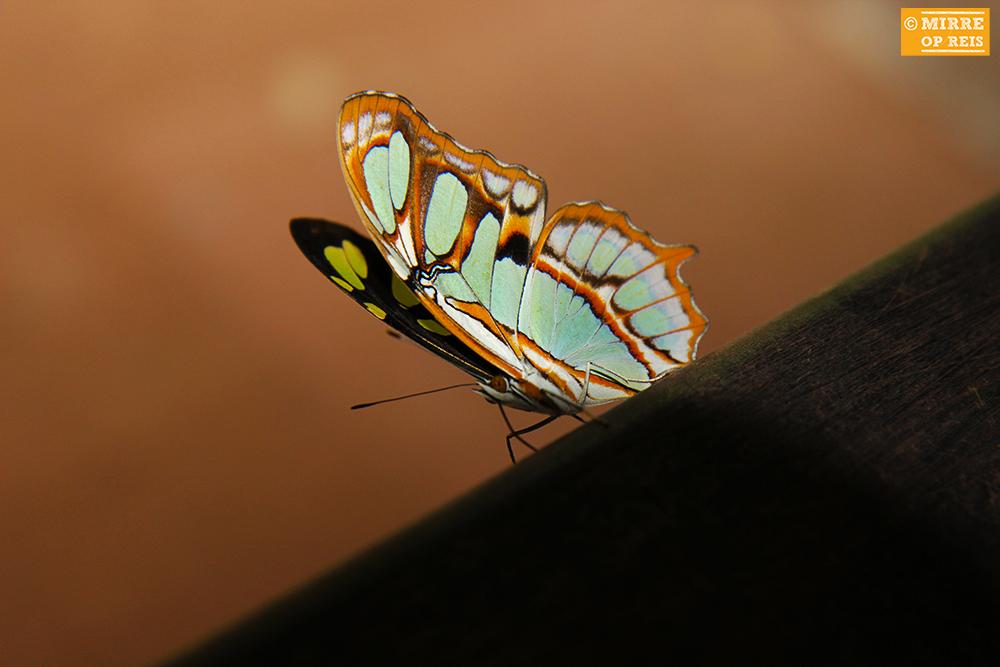 Iguazu watervallen vlinder 007