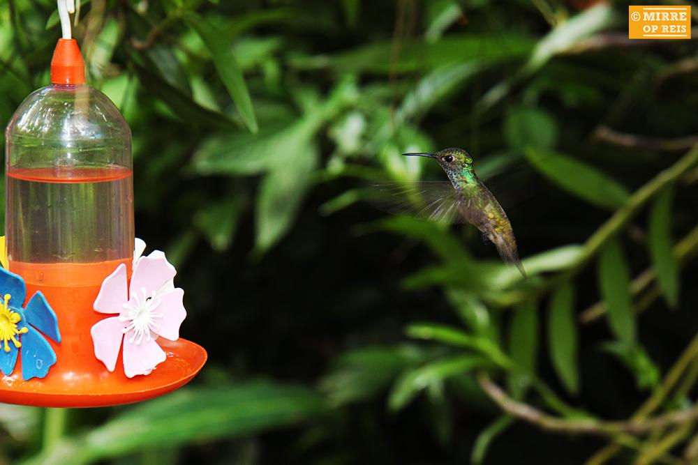 Iguazu kolibrie 003