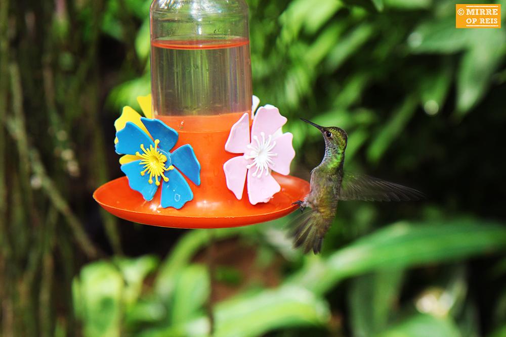 Iguazu kolibries 004