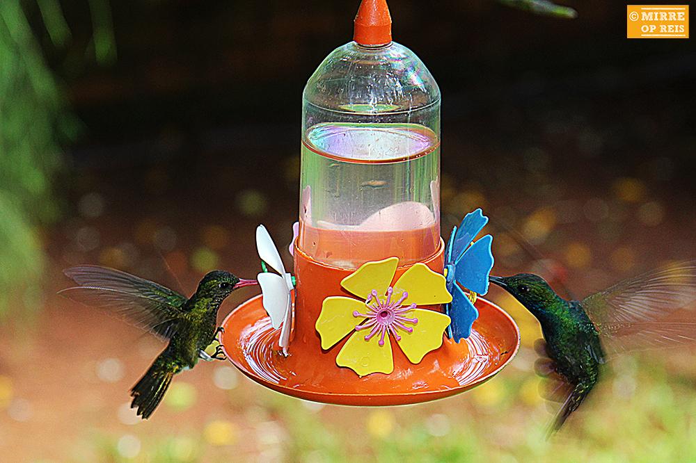 Iguazu kolibries 005