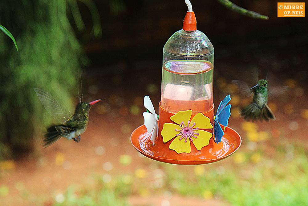 Iguazu kolibries 006