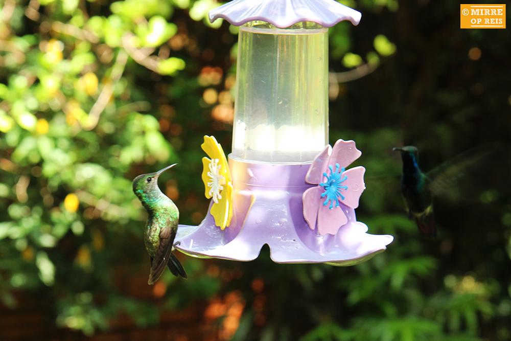 Iguazu kolibrie 008
