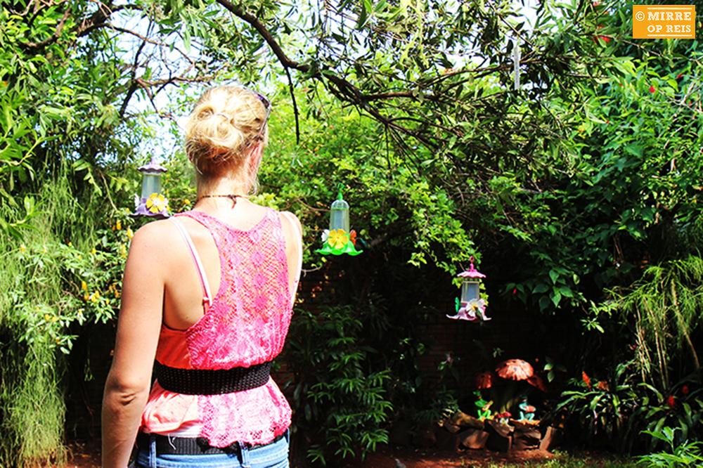 Iguazu kolibries 009
