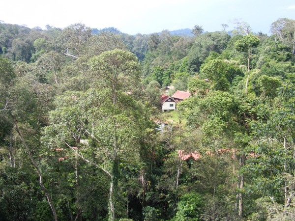 Danum Valley 192