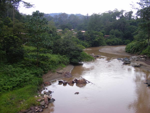 Danum Valley 196