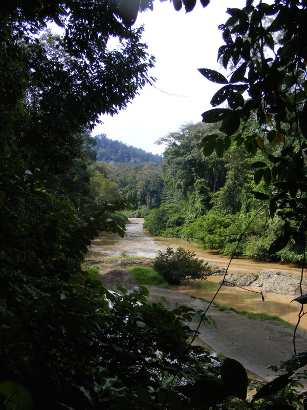 Danum Valley 260