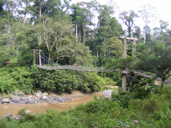 Danum Valley 327