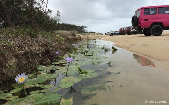Fraser Island 014