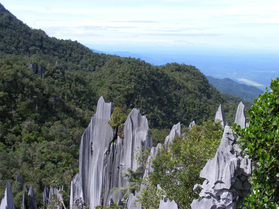 Pinnacles Mulu National Park, Borneo 490