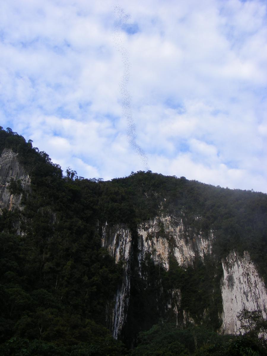 Mulu National Park Borneo 509