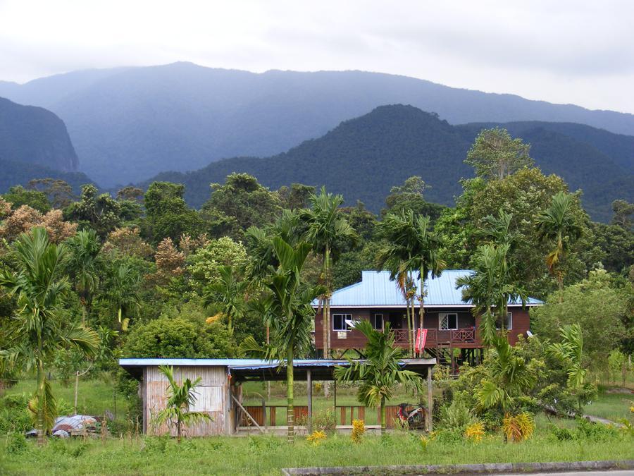 Mulu National Park Borneo 515