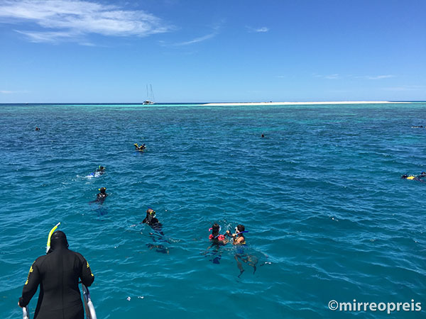 Snorkelen Great Barrier Reef, Cairns