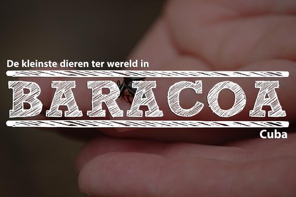Baracoa-uitgelicht