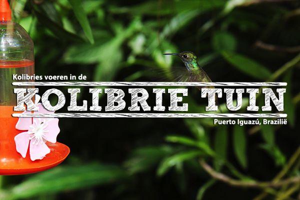 Kolibries-Puerto-Iguazu-Brazilie-uitgelicht