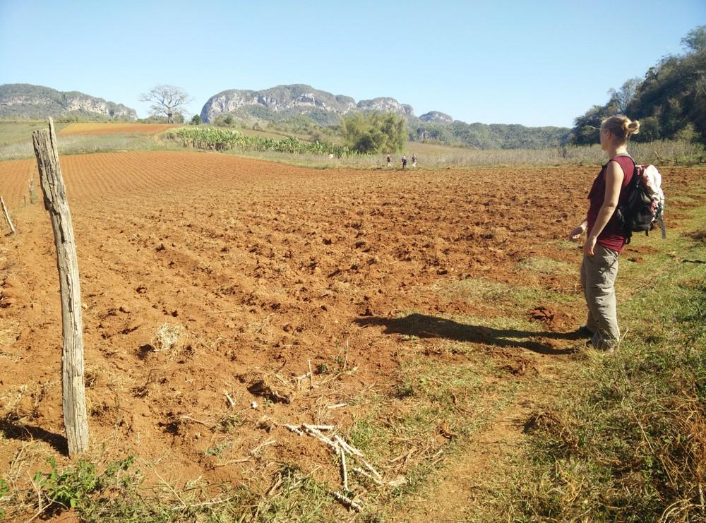 boerenland in Viñales