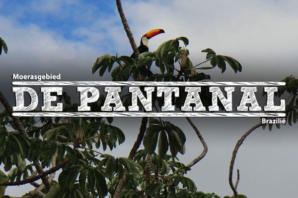 pantanal-uitgelicht