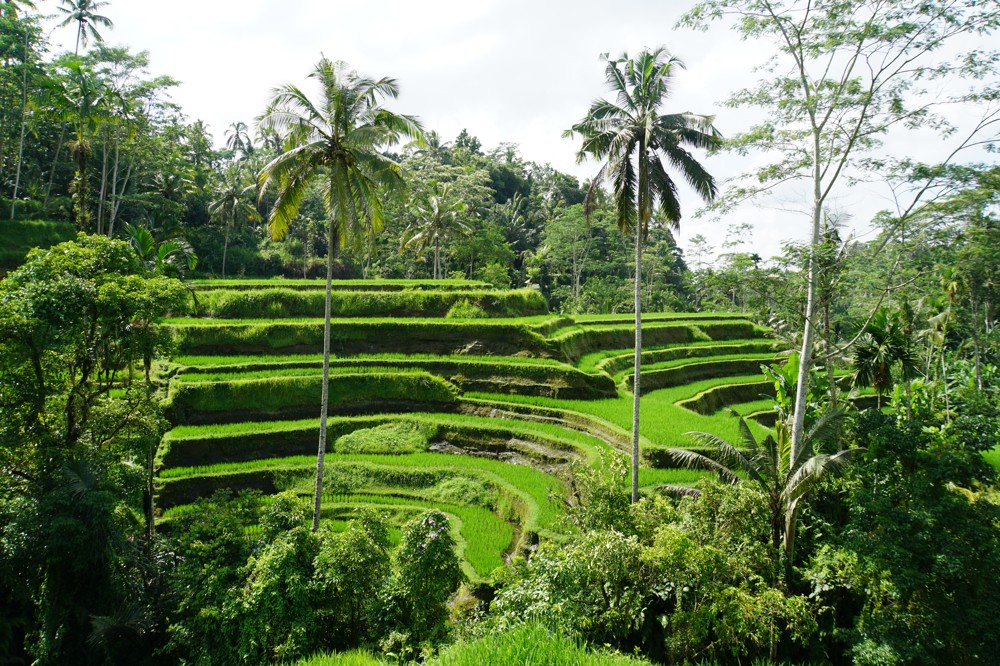 rijstveld-tegalalang-ubud-bali