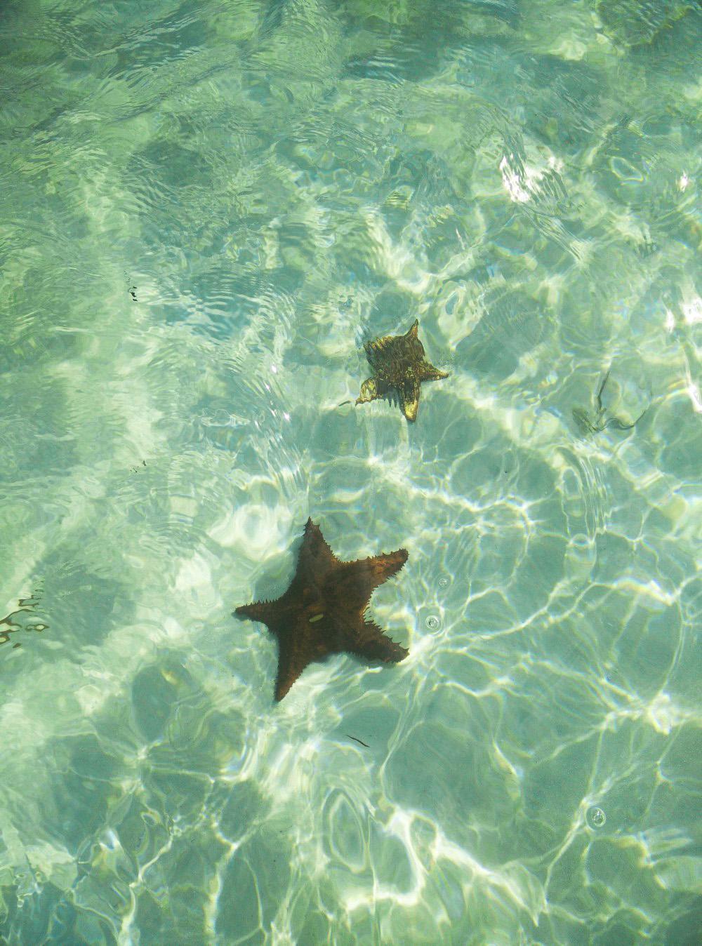 Zeesterren op Cayo Levisa, Cuba
