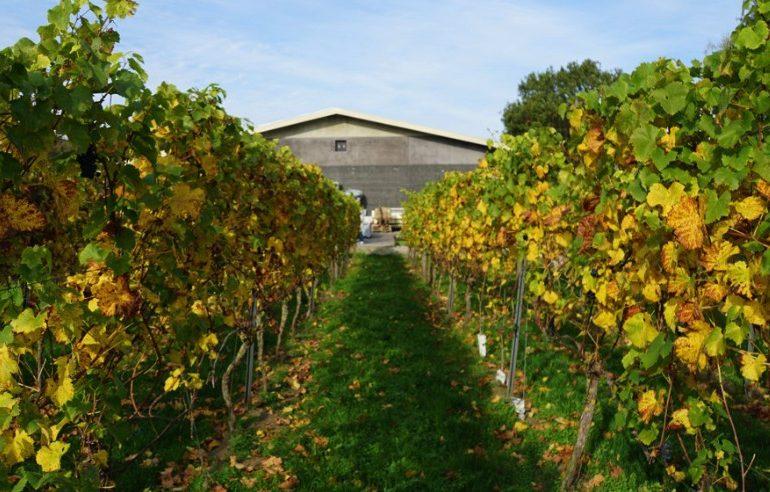 Hof van Twente wijngaard