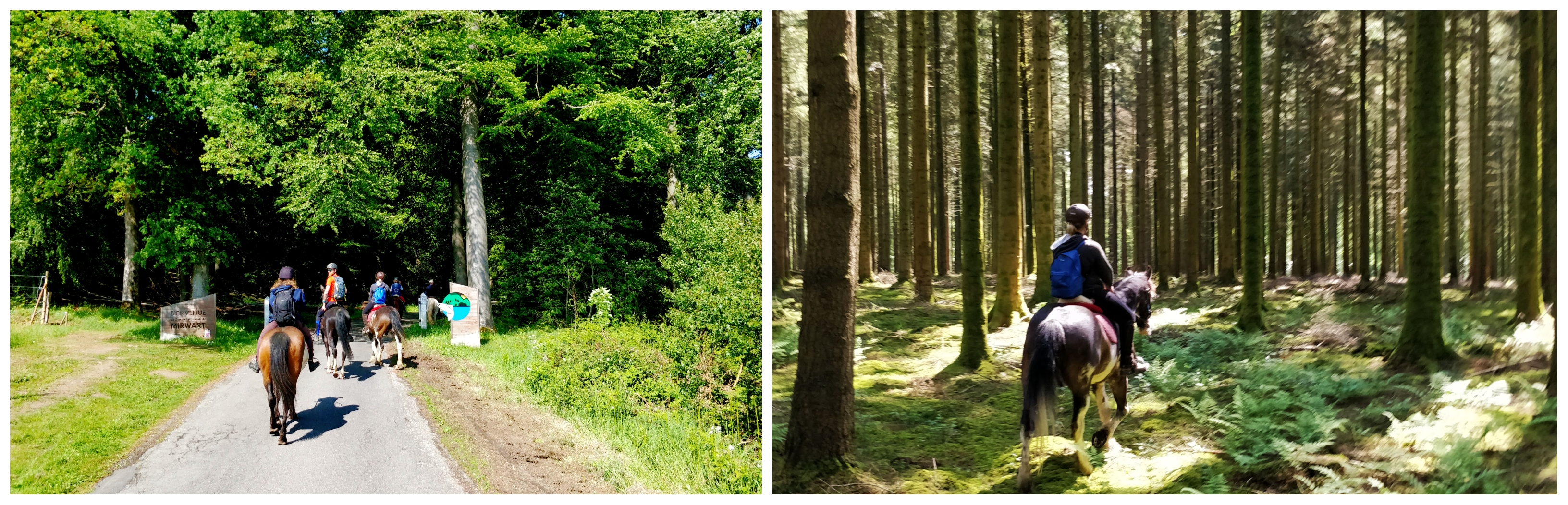 paardrijden in de Ardennen