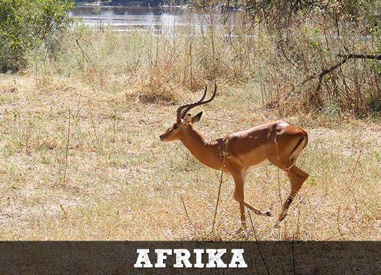 Afrika-thumb