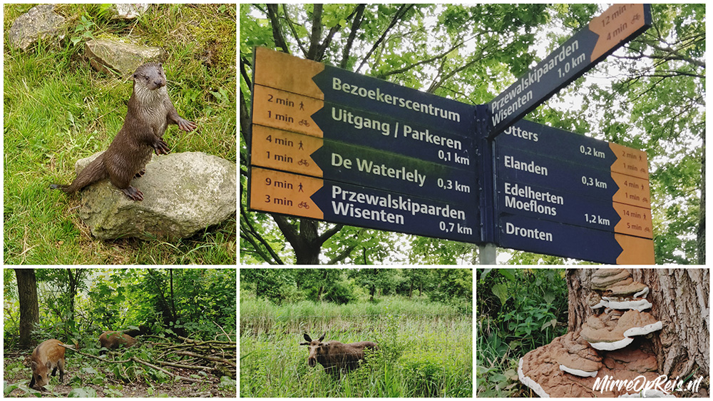 Natuurpark Lelystad collage