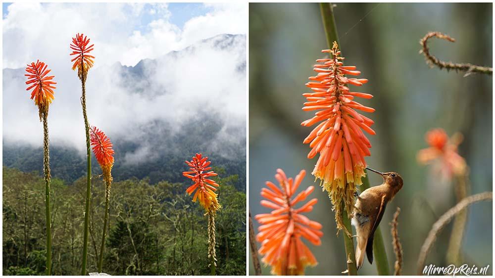 Salento Colombia oranje bloemen kolibries col 003