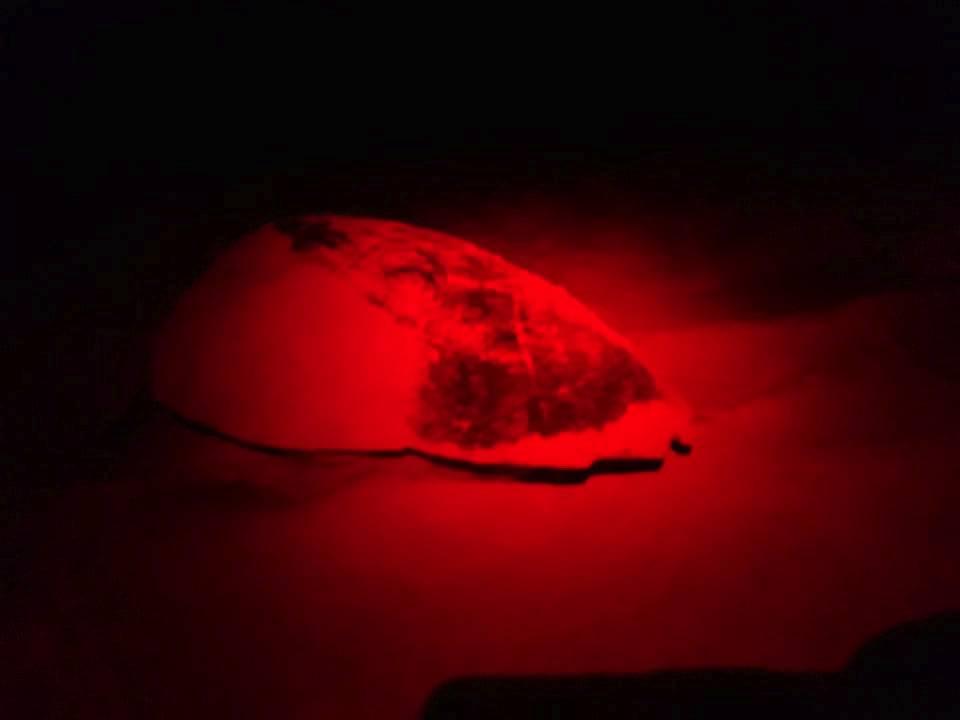 Boa Vista Schildpadden 004