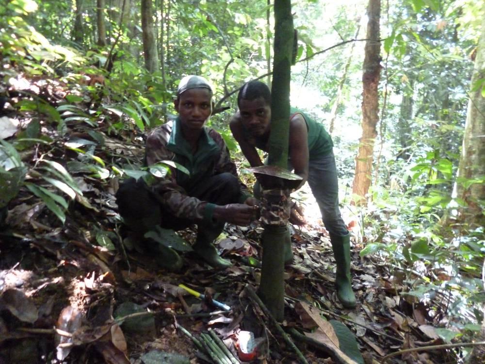 Kameroen – plaatsen van een camera in Korup in 2014