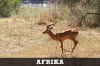 Afrika-thumb2